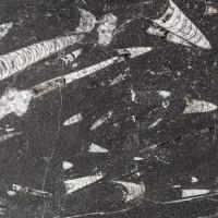 Marmor Fossil Stone