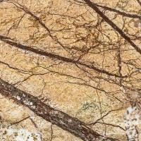 Marmor Rainforest Brown